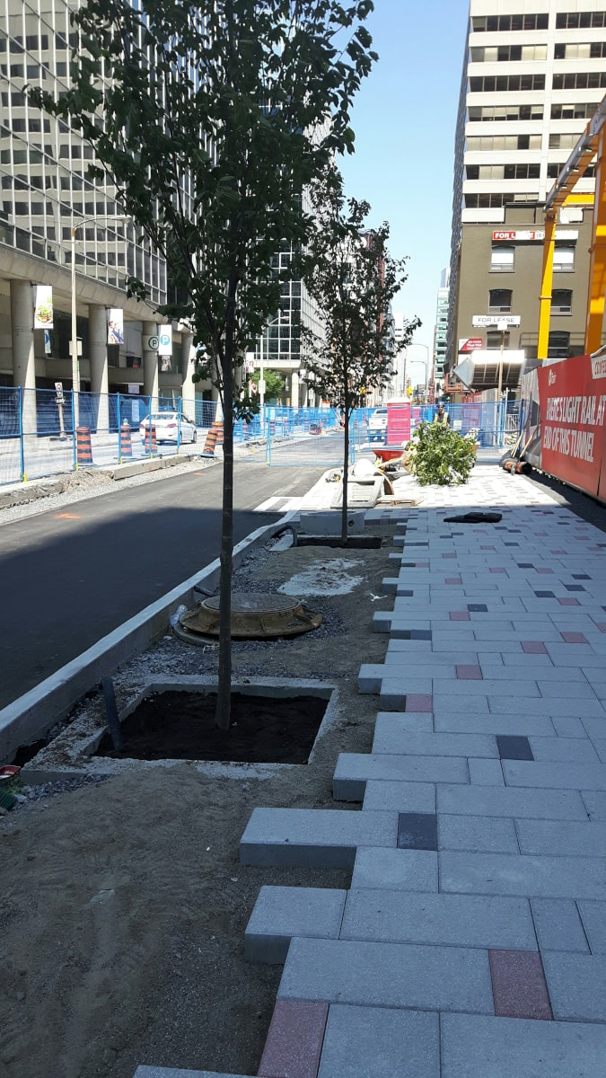 Precast concrete paver and tree installation on Queen Street