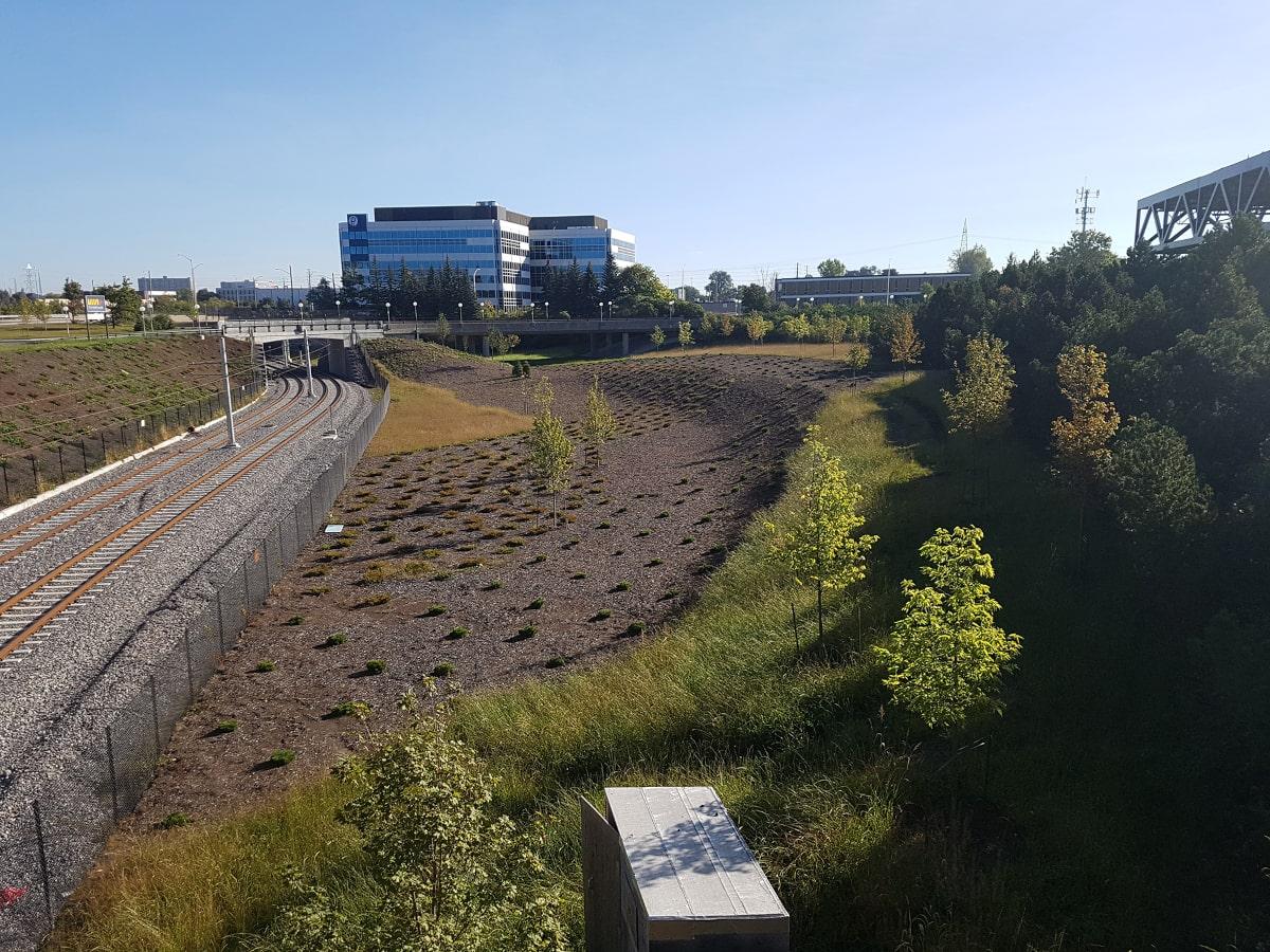 Planting along the light rails tracks at the Tremblay OLRT Station